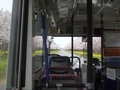 [路線バス]バスの車内から見た菜の花ロード