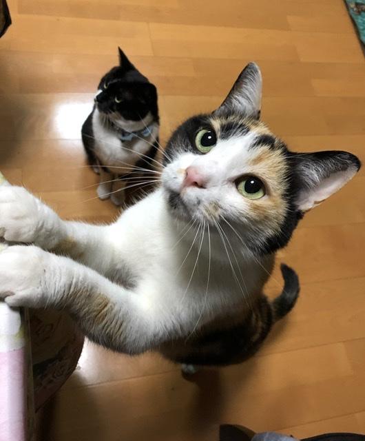 f:id:sora_nekoyashiki:20191214185333j:plain