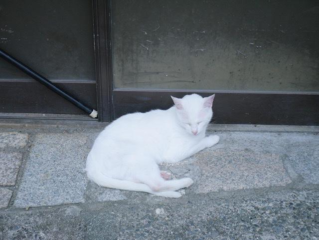 f:id:sora_nekoyashiki:20191226103608j:plain