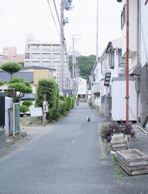 f:id:sora_nekoyashiki:20191226152752j:plain