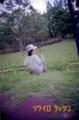 RICOH R1s改/Kodack GOLD100