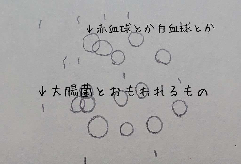 f:id:sorapupusakumin:20190212190748j:plain