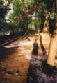 桜2009@道庁(フィルムsolaris400)