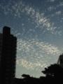 [空][雲][ウロコ雲]うろこ雲。2013/10/7
