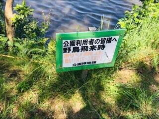 f:id:soshinataoru:20210606171828j:plain