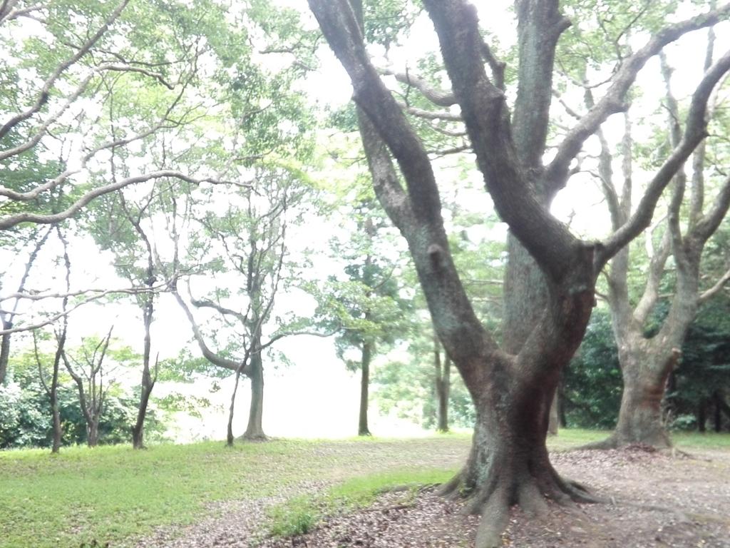 f:id:soulakumiko9333:20170731105012j:plain