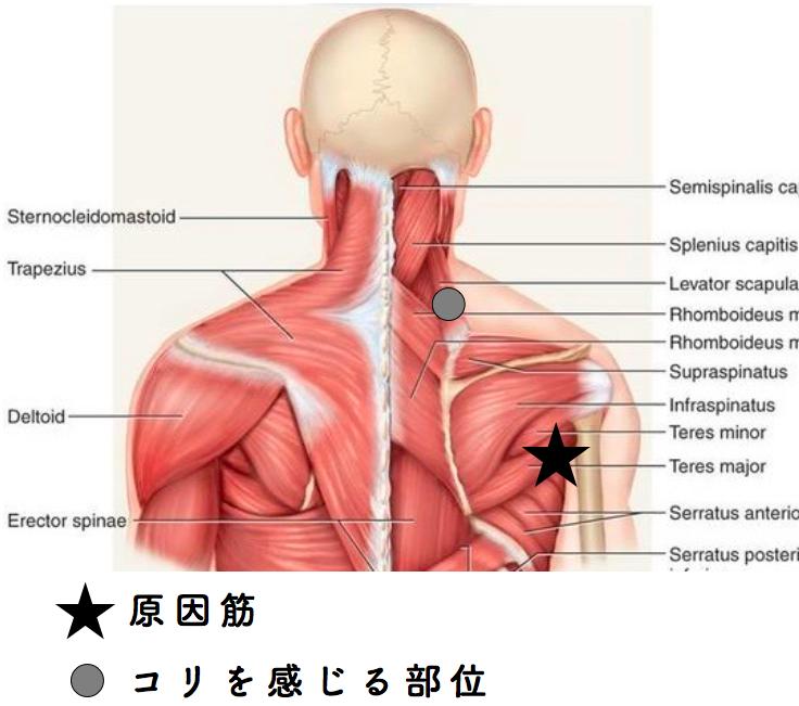 f:id:sousuke1202:20171114161655p:plain