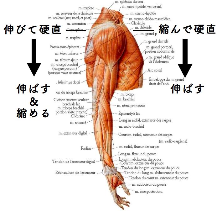 f:id:sousuke1202:20171117153726p:plain