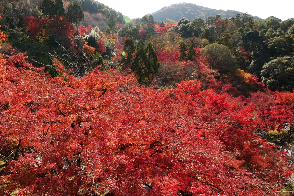 f:id:soutokuaoyama:20200626155314p:plain