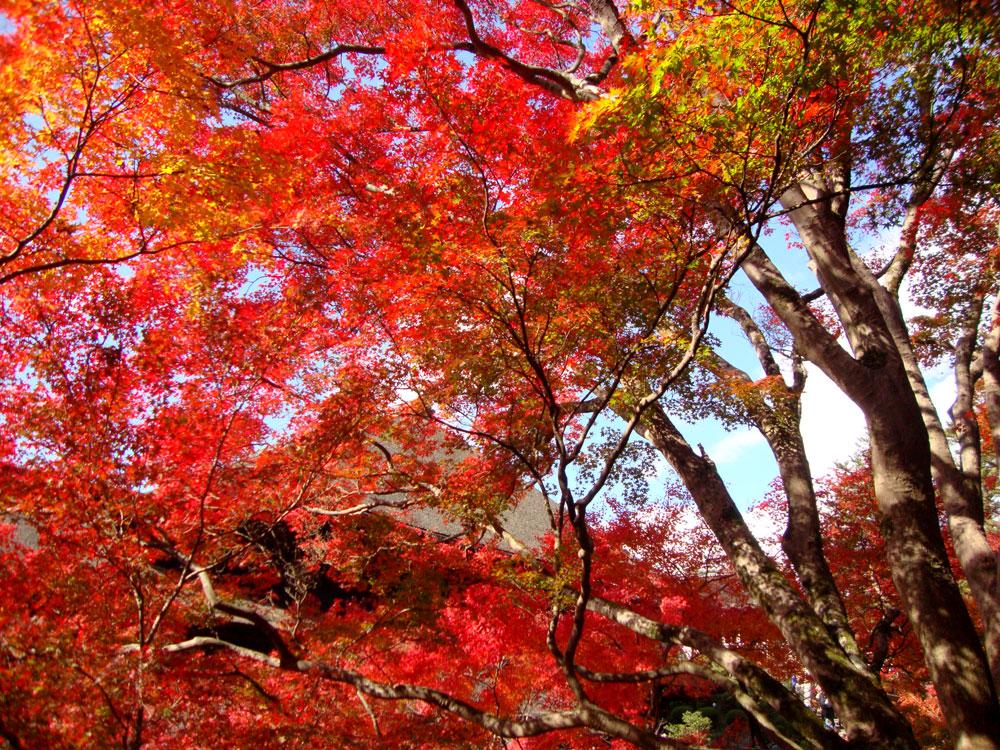 f:id:soutokuaoyama:20200626155616p:plain