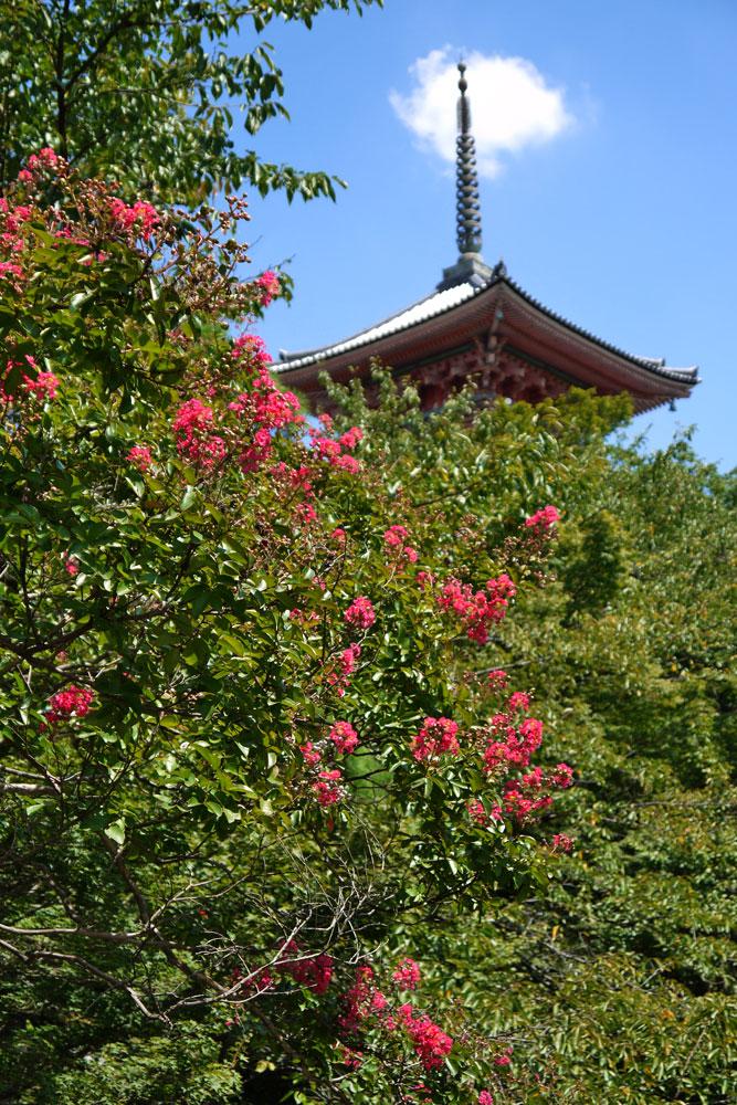 f:id:soutokuaoyama:20200626160152p:plain
