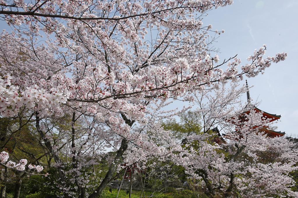 f:id:soutokuaoyama:20200626162051p:plain