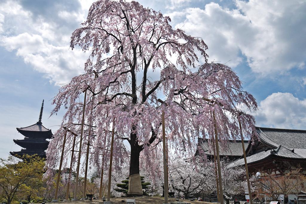 f:id:soutokuaoyama:20200626163838p:plain