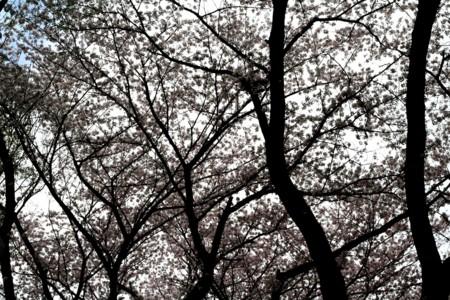 f:id:souxouquit:20110409142658j:image