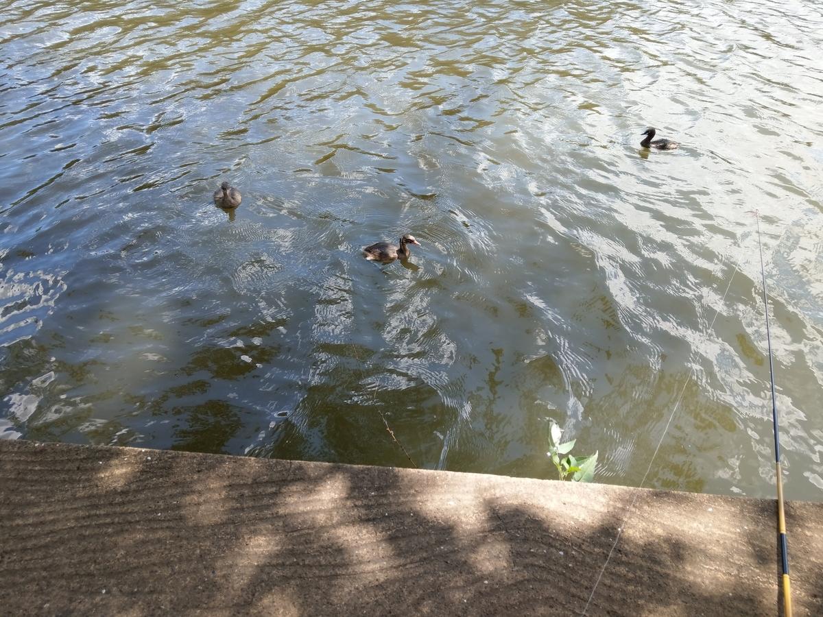 集まる水鳥達