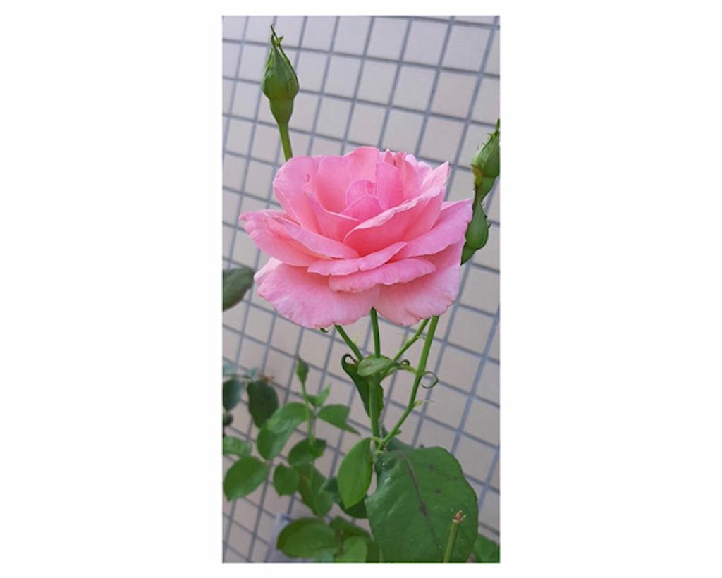 f:id:sowaka06:20210713231350j:image