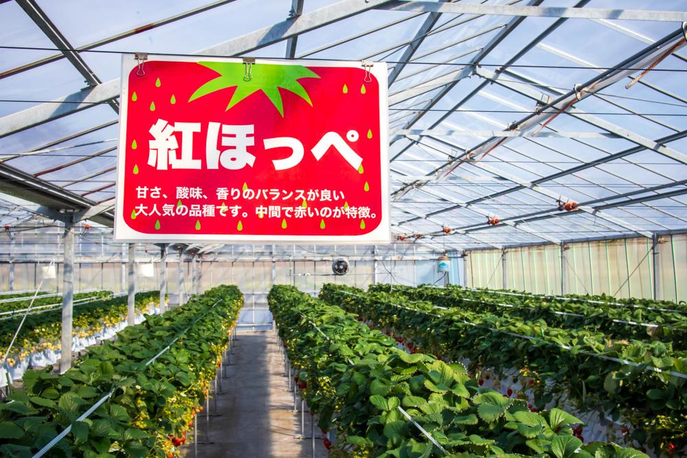 f:id:soybeans37:20200222095815j:image:w600