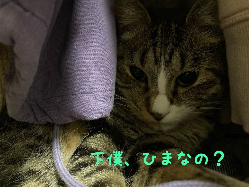 f:id:soyoukoto:20210604150159j:image