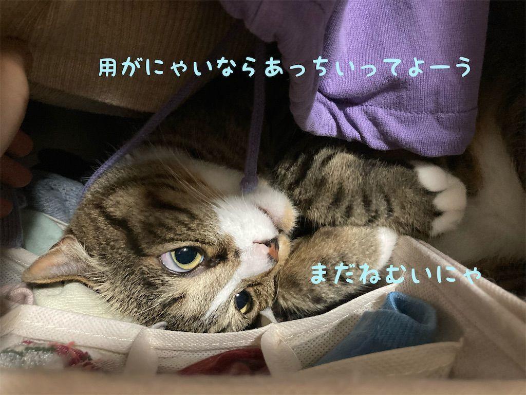 f:id:soyoukoto:20210604150202j:image