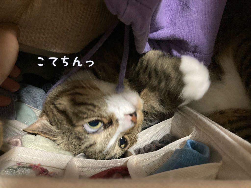 f:id:soyoukoto:20210604150209j:image