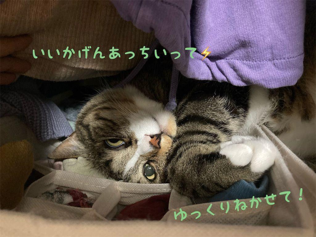 f:id:soyoukoto:20210604150214j:image