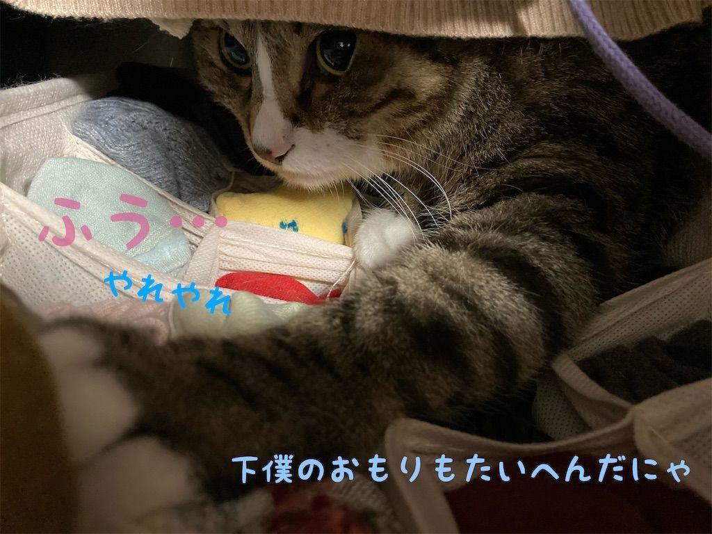 f:id:soyoukoto:20210604150221j:image