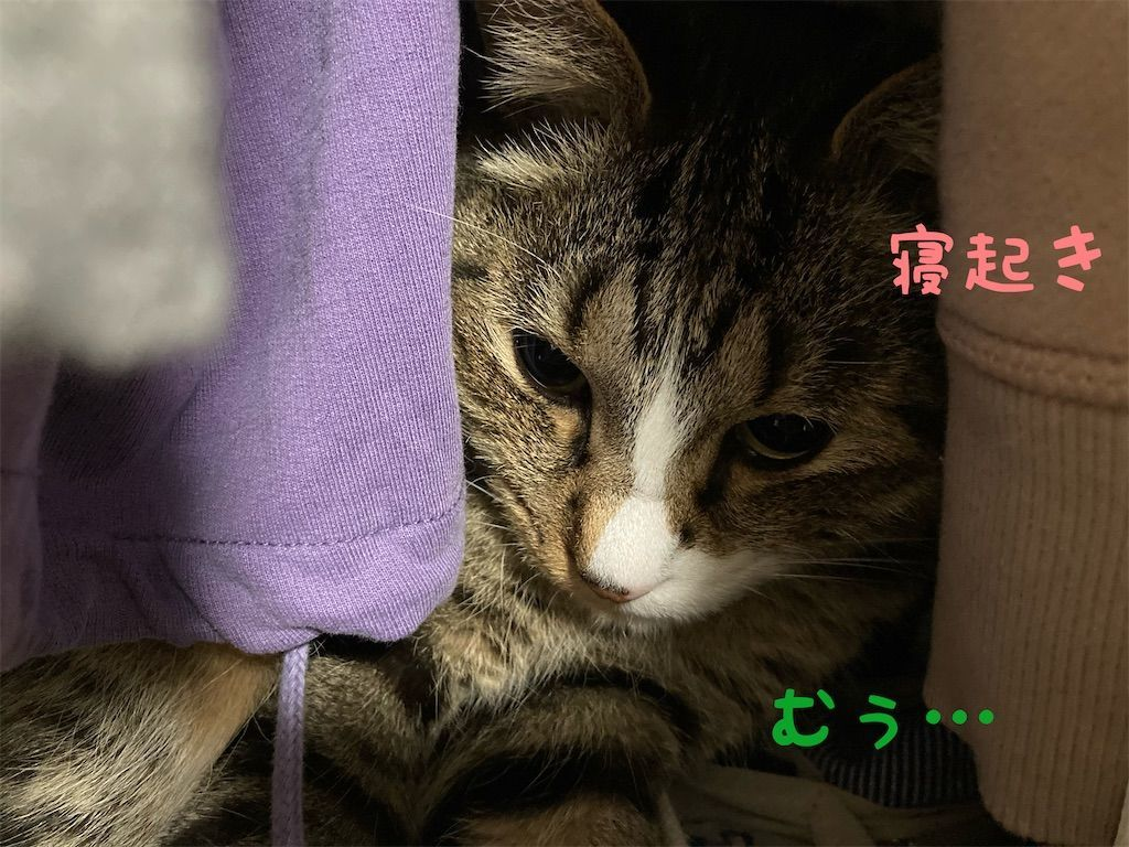 f:id:soyoukoto:20210604150227j:image