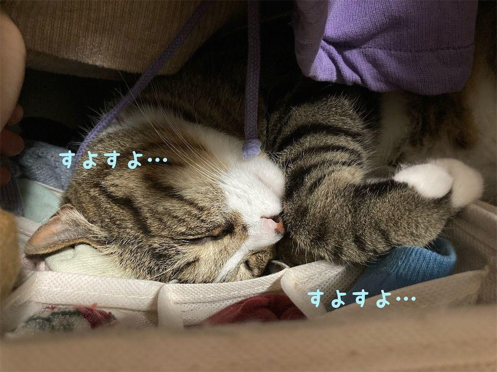 f:id:soyoukoto:20210604150238j:image
