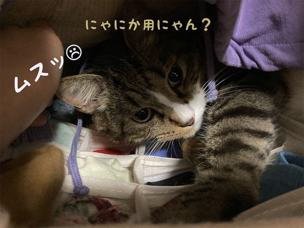 f:id:soyoukoto:20210604150243j:image