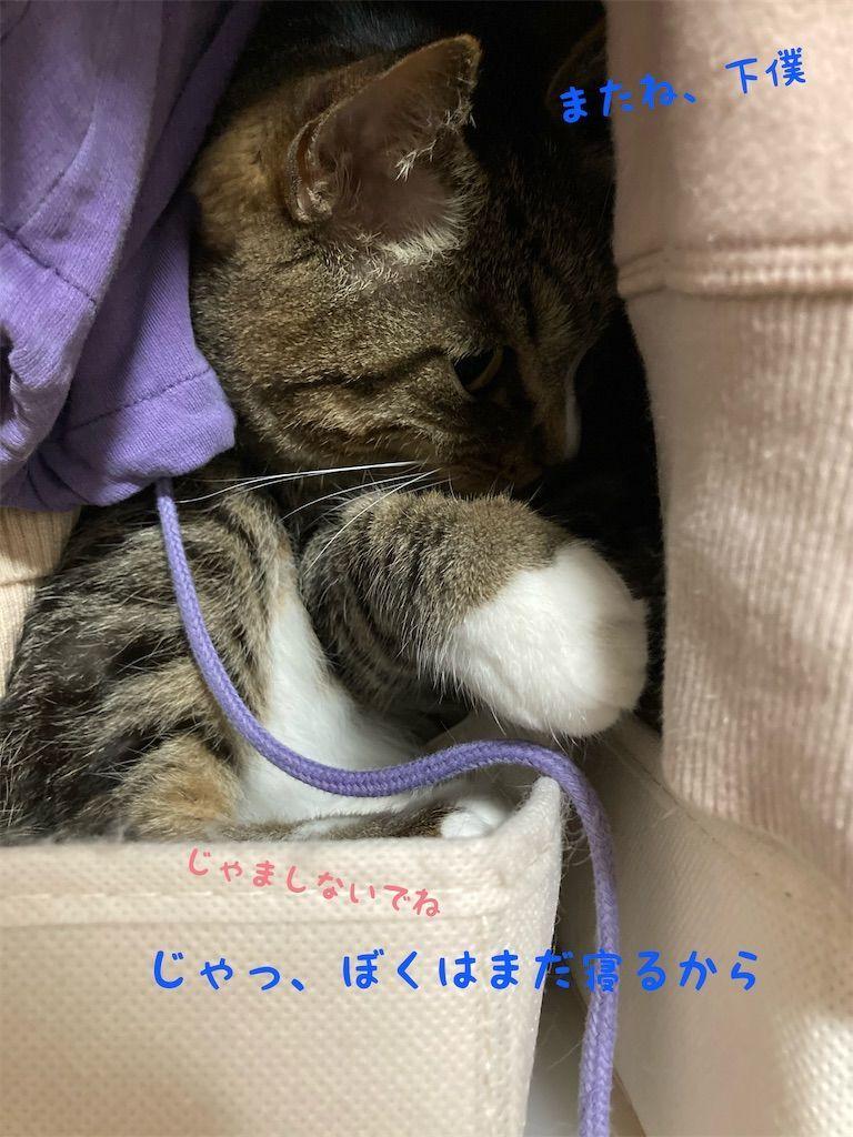 f:id:soyoukoto:20210604150246j:image