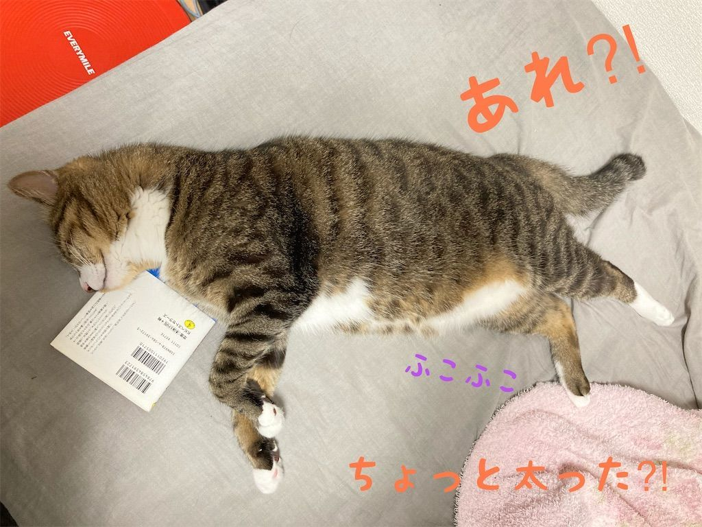 f:id:soyoukoto:20210607234531j:image