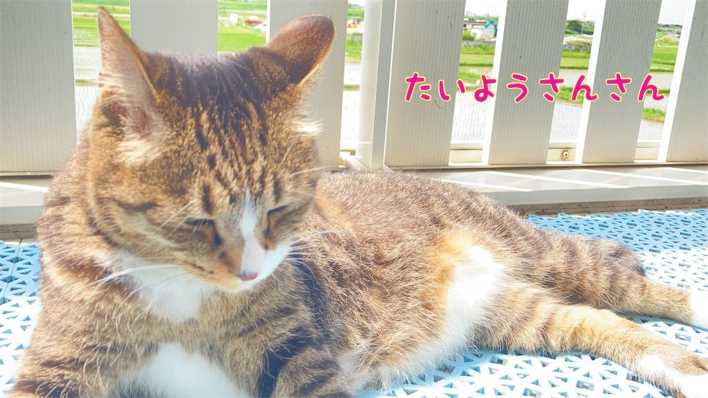 f:id:soyoukoto:20210610222739j:image