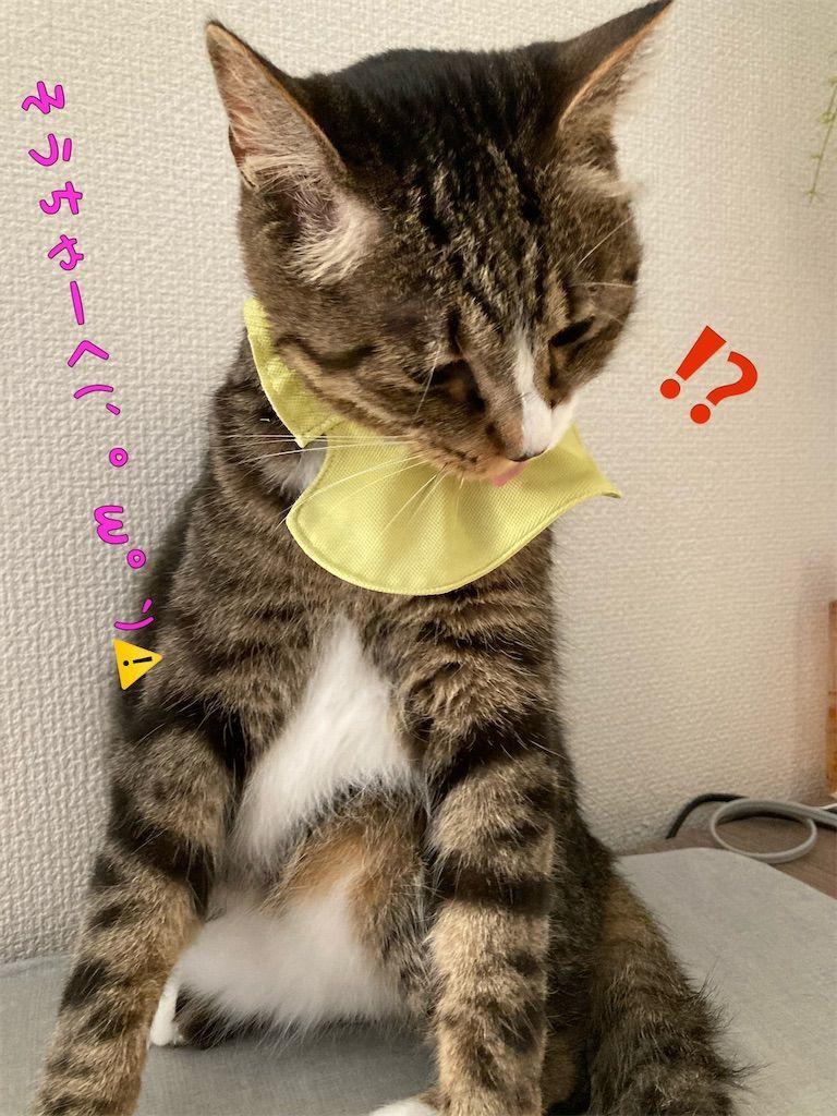 f:id:soyoukoto:20210610224917j:image