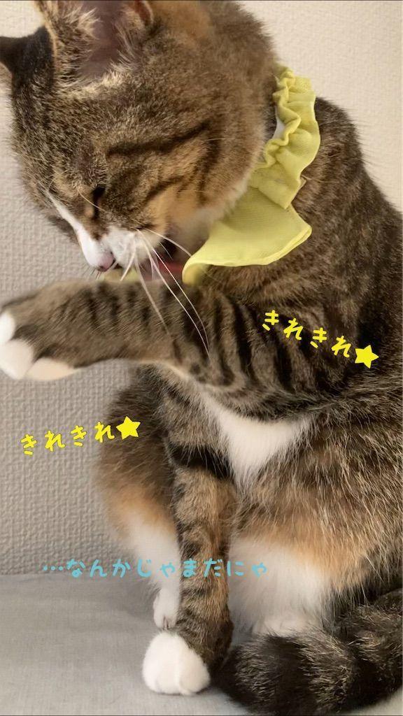 f:id:soyoukoto:20210610224924j:image