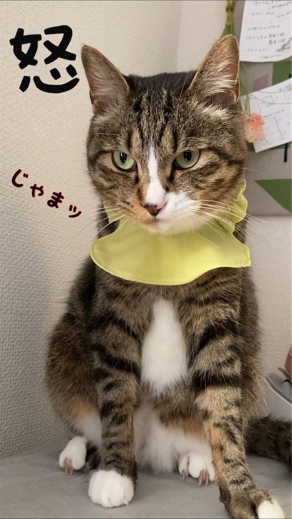 f:id:soyoukoto:20210610225556j:image