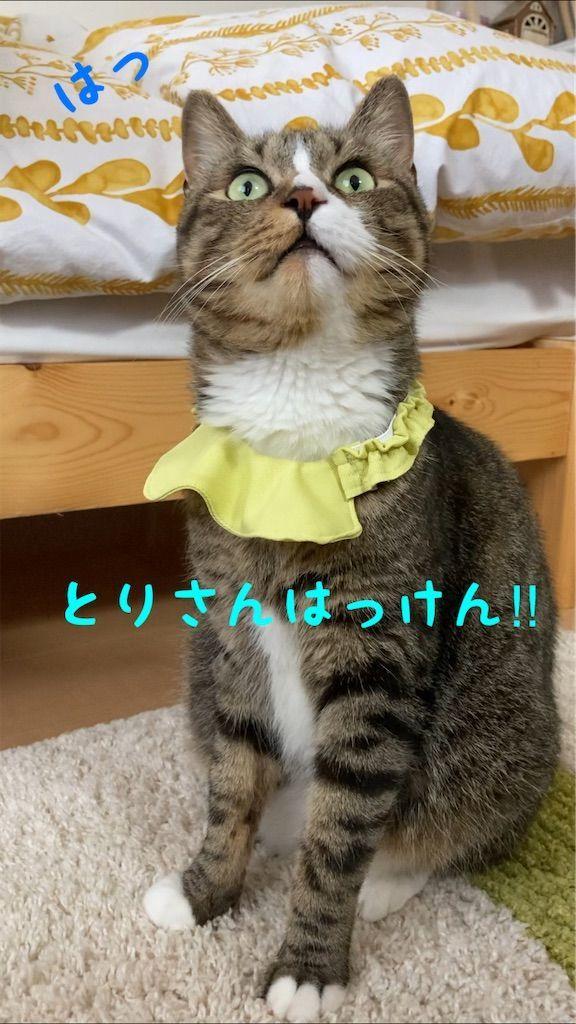 f:id:soyoukoto:20210610225621j:image