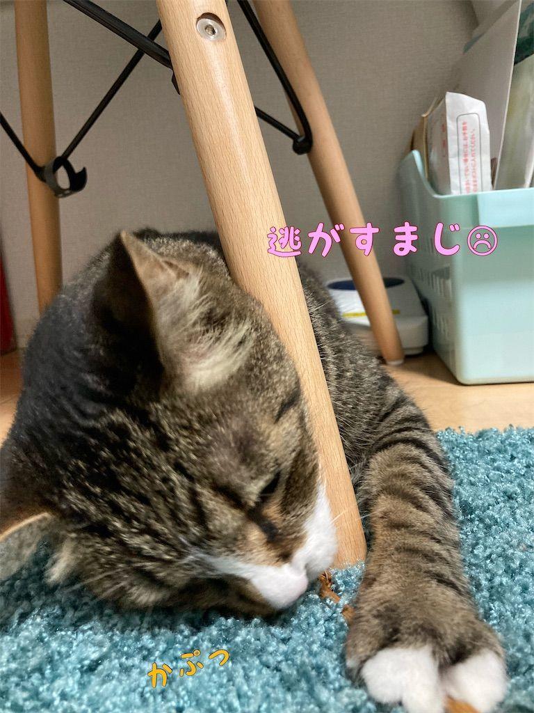 f:id:soyoukoto:20210708205451j:image