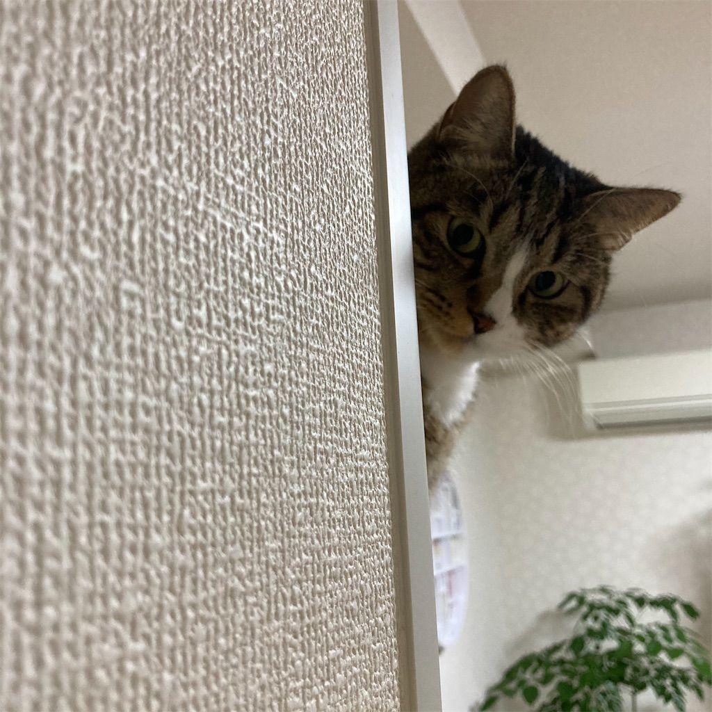f:id:soyoukoto:20210711172849j:image