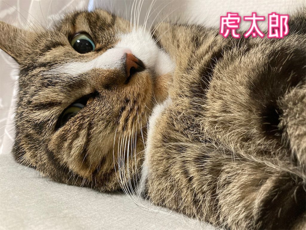 f:id:soyoukoto:20210805171340j:image