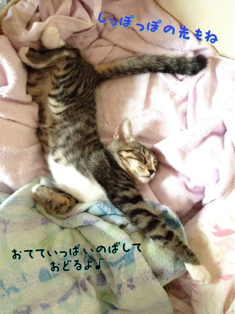 f:id:soyoukoto:20210813225551j:image