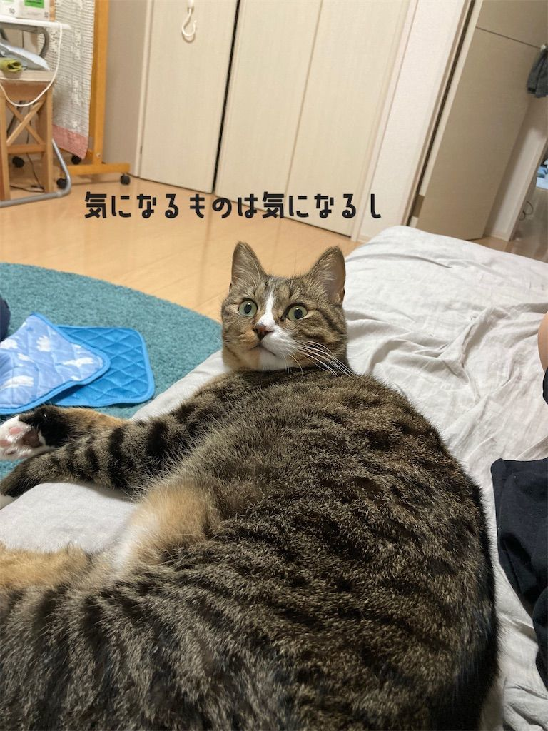f:id:soyoukoto:20210916195657j:image