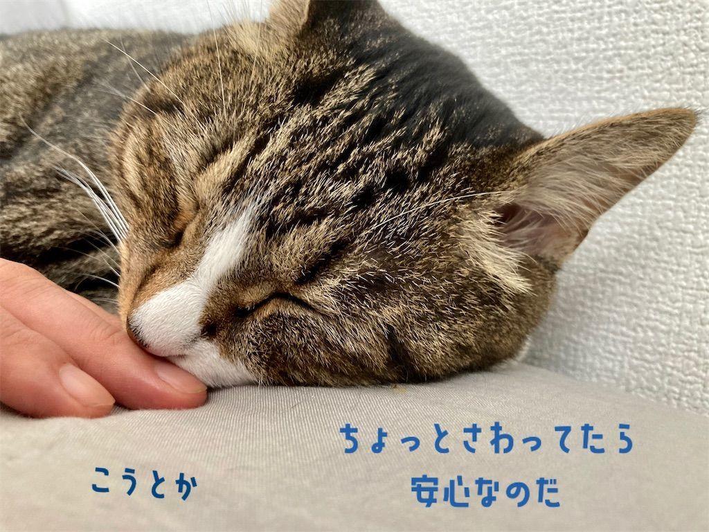 f:id:soyoukoto:20210916195743j:image