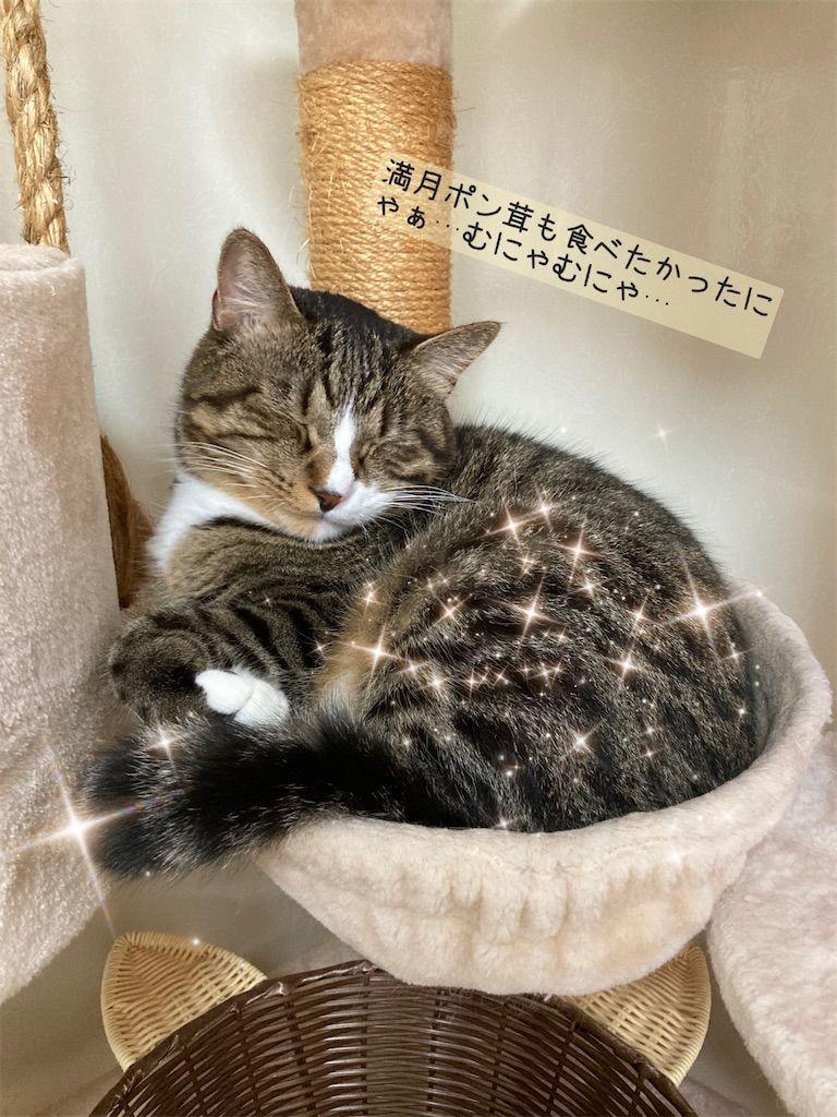 f:id:soyoukoto:20210922165719j:image