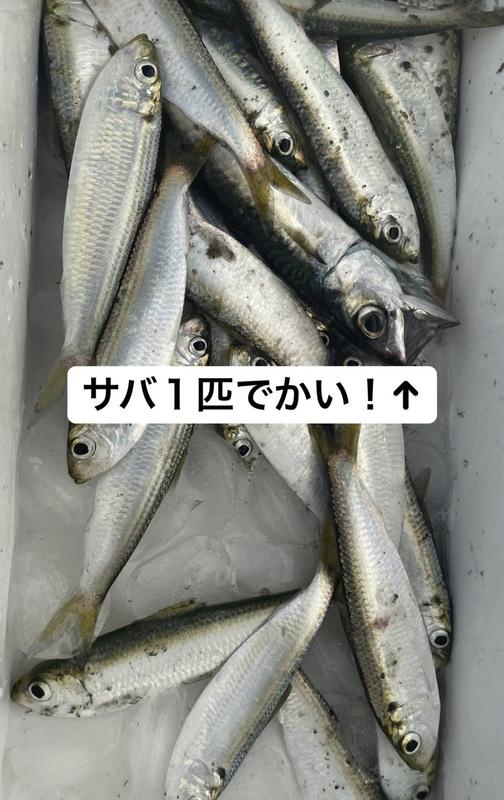 f:id:sp-nakacha:20210816055350j:plain
