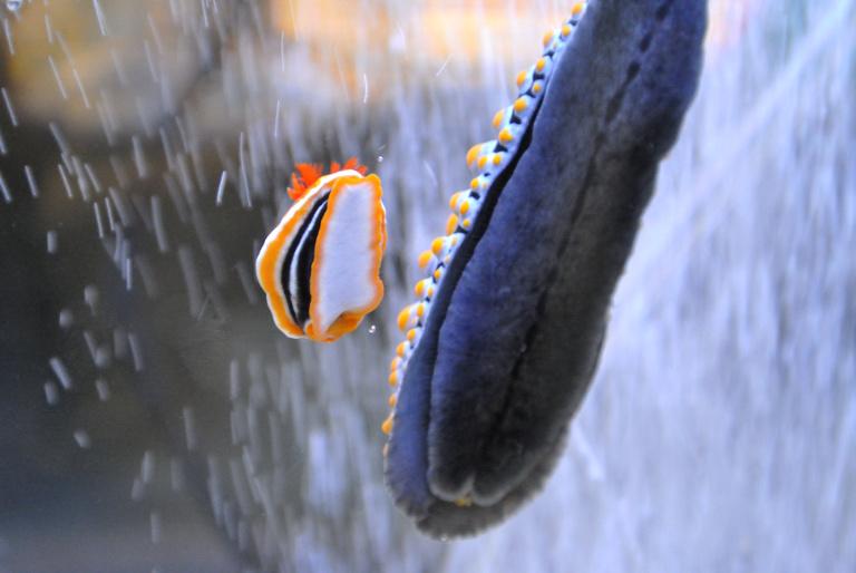 f:id:spanglemaker:20120908134945j:image