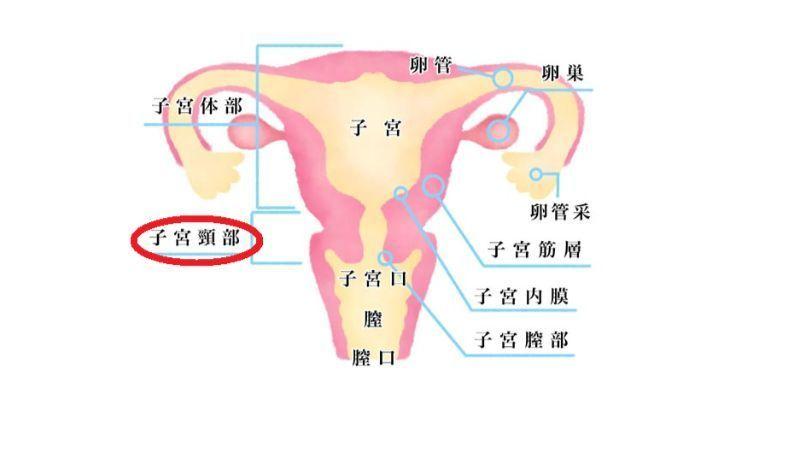 切迫流産 子宮頚管
