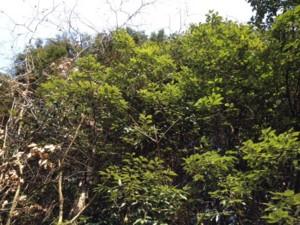 f:id:spidermite:20130228150132j:image