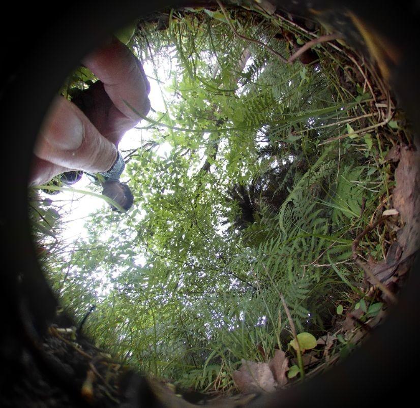 f:id:spidermite:20200715170128j:plain