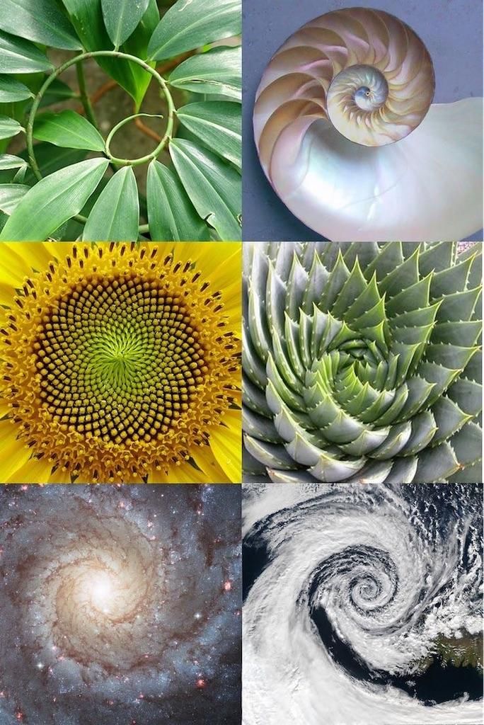 f:id:spiralout:20200803224854j:image