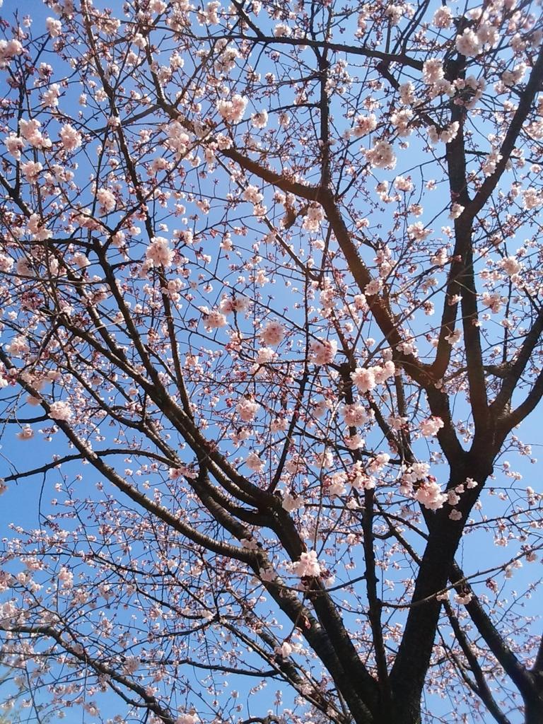 f:id:spring33:20160303220833j:plain